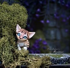 Hello cutie! 🍃🐈 (pure_embers) Tags: pure laura embers doll dolls england uk pureembers photography photo art cute kitty cat bengal kitten eve studio max maximus portrait 3d printed artdoll moss green