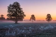 Frosty Dawn / Mroźny Świt (Grefer) Tags: sunrise poland polska nikond300s landscape trees autumnlandscape autumn