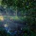 Misty-backwater