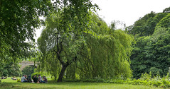 Summer Green Durham. . . (CWhatPhotos) Tags: cwhatphotos camera photographs photograph pics pictures pic picture image images foto fotos photography artistic that have which contain digital gred durham city north east egland uk wear river trees nature people summer hat tree leaf prebends bridge pre bends