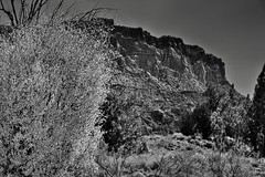 Yellow and Greens with Cliff Walls as a Backdrop (Black & White, Capitol Reef National Park)