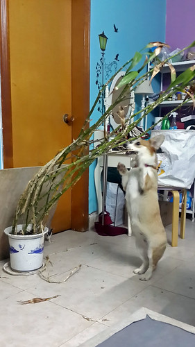 Fuck this bamboo!