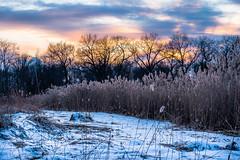 Ojibway at Dusk (Neil Cornwall) Tags: 2020 canada february ontario windsor ojibwayprairienaturereserve snow sunset winter