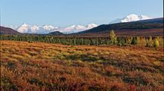 Late Afternoon Light on Tundra and Alaska Range (Denali National Park & Preserve)