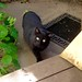 Little Black cat outside, I feed her sometimes IMG_4124