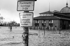 Sonntags Fischmarkt (michael_hamburg69) Tags: hamburg germany deutschland fischmarkt hochwasser flutwarnung überschwemmung hafen harbor harbour highwater floods flood elbe river flus sturmtief sturm sabine orkan februar 2020 schweresturmflut orkantiefsabine fischauktionshalle