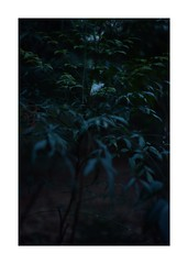 This work is 11/21 works taken on 2020/1/3 (shin ikegami) Tags: sony ilce7m2 a7ii sonycamera 50mm lomography lomoartlens newjupiter3 tokyo 単焦点 iso800 ndfilter light shadow 自然 nature naturephotography 玉ボケ bokeh depthoffield art artphotography japan earth asia portrait portraitphotography