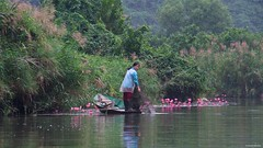 IMGP4544 Setting fishing nets (Claudio e Lucia Images around the world) Tags: trangan vietnam pentax pentaxart pentaxkp pentax18135 pentaxcamera pentaxlens rain rainyday power river flower water waterlilium loto lotusflower tran ang caves grottoes ninhbinh boat rowing happy planet asia favorites duck happyplanet asiafavorites