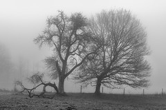 *old but photogenic* (Albert Wirtz @ Landscape and Nature Photography) Tags: albertwirtz hupperath baum tree nebel fog mist nebbia laniebla brume bruma brouillard misty foggy neblig wiese meadow moseleifel eifel südeifel wittlichland bernkastelwittlich bw blackandwhite schwarzweiss blackwhite nature natur natura naturaleza fineart landscape landscapefineart naturefineart fineartphotography monoton monotone germany allemagne deutschland rheinlandpfalz rhinelandpalatinate nikon d810 paysage paisaje campo campagne campagna paesaggio