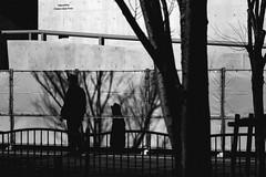 _1360610B Urban space (soyokazeojisan) Tags: japan osaka city street light tree shadow people winter bw blackandwhite monochrome digital lumix tx1 2020