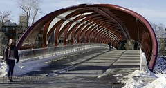 my fav bridge in Calgary (zawaski -- Thank you for your visits & comments) Tags: beauty work love canada naturallight calgary lovepeace canon noflash 4hire serves zawaski©2020 silver ammolite rare alberta editing ammonite ambientlight leica