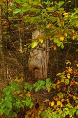 Naturfarben (berndtolksdorf1) Tags: deutschland thüringen wald farben blätter bunt baumstamm jahreszeit herbst outdoor