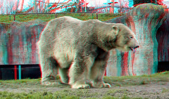 PolarBear Blijdorp Zoo Rotterdam 3D (wim hoppenbrouwers) Tags: polarbear blijdorp zoo rotterdam 3d anaglyph stereo redcyan ijsbeer