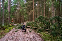 2020 Bike 180: Day 28 (suzanne~) Tags: 2020bike180 bike bicycle storm sabine forest path fallentree stump