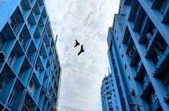 (sharmi_diya06) Tags: street streetphotography streetphot abstract birds animal sky natgeoyourshot natgeophotographers natgeophotographer yourshotnatgeo colors color letsexplore outside