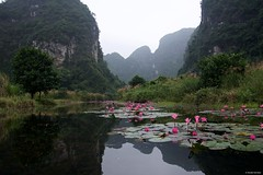 IMGP4584 Water Lilies (Claudio e Lucia Images around the world) Tags: trang an vietnam pentax pentaxart pentaxkp pentax18135 pentaxcamera pentaxlens rain rainyday power river flower water waterlilium loto lotusflower tran ang caves grottoes ninhbinh boat rowing happy planet asia favorites duck trangan lilies waterlilies