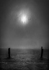 The Gateless Gate (andredekok) Tags: morning meditation bw monochrome texture birds meadow landscape fog mist crow grass
