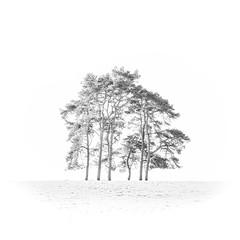 Six Trees (Helmuth of Boskone) Tags: badbywood february northamptonshire morning winter daventry england unitedkingdom highkey blackandwhite monochrome trees copse