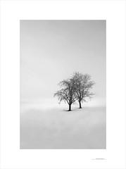 Las formas del invierno (E. Pardo) Tags: invierno winter árboles trees bäume formas formen forms nieve snow schnee niebla nebel fog paisaje landscape landschaft steiermark austria