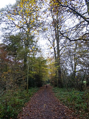 Photo of Dog on a path in woods, 2019 Nov 23