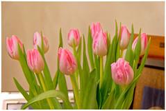Bonne Saint Valentin - Happy Valentine (p.franche malade - Sick) Tags: blume 花 blomst flor פרח virág bunga bláth blóm bloem kwiat цветок kvetina blomma květina ดอกไม้ hoa زهرة schaerbeek schaarbeek bruxelles brussel brussels belgium belgique belgïe europe pfranche pascal franche fz1000 bouquet vert rose tulipes macro pétales feuilles green pink tulips petals leaves fleur