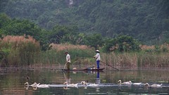 IMGP4653 Illegal Fishing with electricity (Claudio e Lucia Images around the world) Tags: trangan ninhbinh vietnam trang an pentax pentaxart pentaxkp pentax18135 pentaxcamera pentaxlens rain rainyday power river flower water waterlilium loto lotusflower tran ang caves grottoes boat rowing happy planet asia favorites duck lilies happyplanet asiafavorites