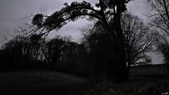 Le silence (Un jour en France) Tags: canoneos6dmarkii canonef1635mmf28liiusm noiretblanc noiretblancfrance cielpaysage strange monochrome black nuit contrejour