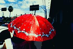 """Red Umbrella"" - Cuiabá, Mato Grosso, Brasil. (instagram @paulissonmiura) Tags: cuiabá matogrosso brasil streetphotoraphy street people person fotografiaderua avenida isaacpóvoas centro cidade city urbano urban urbana urbanização paisagemurbana shadow sombra umbrella red vermelho guardachuva sombrinha parasol sun sunny day light nikon d3100 cultura culture cultural cuiabana cuiabano cba cgb lightroom paulissonmiura"