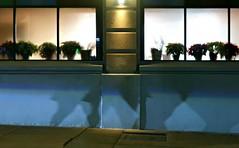 Jardin des Plantes (Robert Saucier) Tags: rue street boston nuit night nightshot noflash bleu blue trottoir sidewalk pavement fenêtre window vitre glass cristal plantes plants img2363 ombre shadow