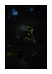 This work is 16/21 works taken on 2020/1/3 (shin ikegami) Tags: sony ilce7m2 a7ii sonycamera 50mm lomography lomoartlens newjupiter3 tokyo 単焦点 iso800 ndfilter light shadow 自然 nature naturephotography 玉ボケ bokeh depthoffield art artphotography japan earth asia portrait portraitphotography