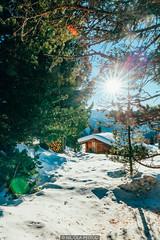 Through the trees (Nicola Pezzoli) Tags: italy italia val gardena bolzano dolomiti dolomites mountain montagne ski sci snow neve winter inverno gröden col raiser hütte baita wood sun flare sassolungo
