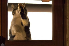 Give Me Five...cans of salmon, tuna,chicken, beef and turkey (Xena*best friend*) Tags: georgeclooney gc givemefive lolcats cats whiskers feline katzen gatto gato chats furry fur pussycat feral tiger pets kittens kitty animals piedmontitaly piemonte canoneos760d italy wood woods wildanimals wild paws calico markings purr digitalrebelt6s canonefs18135mmf3556isstm flickr animal pet photo nature funnycats hilariouscats