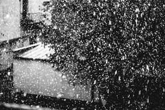 Snowing | Kaunas #43/365