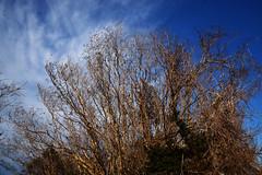 20200212_008_2 (まさちゃん) Tags: 空 雲 樹木 木