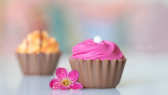 Two (hehaden) Tags: sweets confectionery candies chocolates cupcakes pink strawberry orange flower japaneseornamentalapricot benichidori stilllife tabletop macro reflection shallowdepthoffield sel90m28g