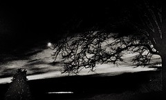 Watching Nightfall (Richie Rue) Tags: night nightphotography nightime moon silhouette foma fomapan400 fomadon blackandwhite monochrome bnw bw 35mm outdoors mindfulphotography contemplativephotography haiku freeform tree clouds dusk sunset
