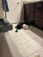 Winston playing