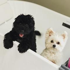 Winston & his big brother Teddy