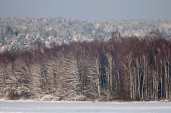 Winter mosaic / Zimowa mozaika (Grefer) Tags: poland polska podlasie winter zima snow tree trees