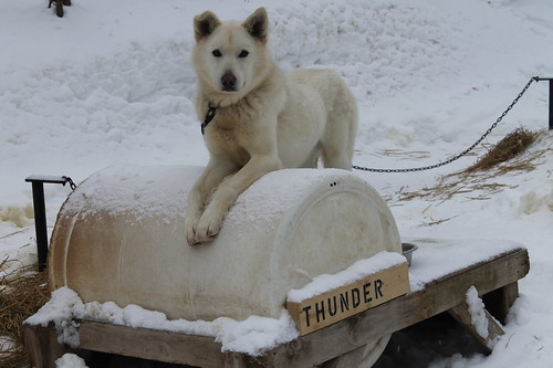 Dog Sledding and Ice Caves of Northern Michigan, January 2020