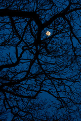 Sleepy hollow (jopperbok) Tags: jopperbok johnny depp christina ricci tim burton movie film horror gothic sleepy hollow tree moon shapes nature silhouet dark blue night full irving story serie supernatural fear winter leafless lines structure