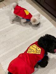 Winston & Teddy being Superman