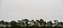 Prairie Lakes Road (Kyle Kruchok) Tags: moody forest trees florida osceola country sony a7r2 a7rii alpha bealpha prairie fog