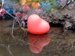Lost (BrigitteE1) Tags: valentinstag valentine luftballon balloon herz heart happyvalentine gewässer waters bodyofwater love liebe valentineday umwelt environmental natur nature gefahr danger