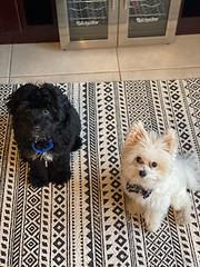 Winston & Teddy