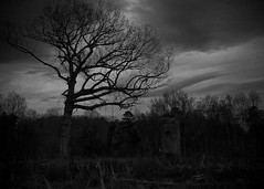 Collection 1 image 3 (j14melton) Tags: vacant blackandwhite trees noose hangman landscape nature horror haunted spooky gothic