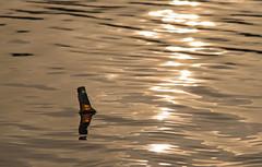 Beer at Sundoun (Denis Moynihan) Tags: beer bottle float water sea seascape donabate malahide broadmeadow estuary evening sunset light coast minimalist reflection