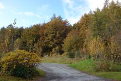 Photo of DSC03779 Queen's View, Scotland