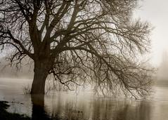 Langueur / Languor (PhlippeC.) Tags: arbre tree ardennes fleuve meuse monochrome cure