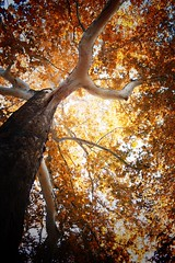 Tree (Missing Pictures) Tags: explored explore sunshine sun landscape forest color fall autumn nature tree